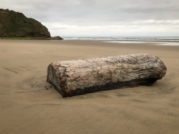 Good-sized drift wood