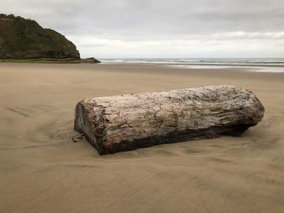 Good-sized drift wood