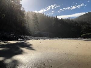 Beach, cobbles, forest