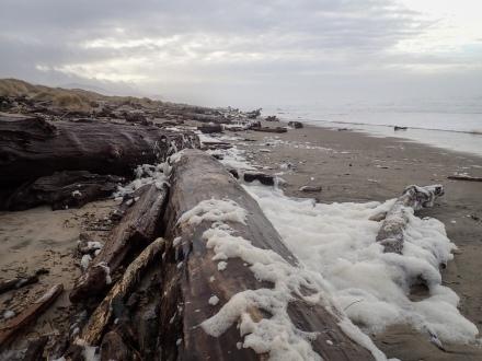 Sea foam up in the big wood