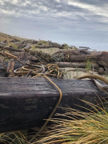 A tangle of lost gear, big wood, and drift bull kelp on the backshore