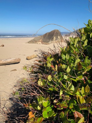 Patch of salal at beach level in the foreground; beach and surf sone in the distance