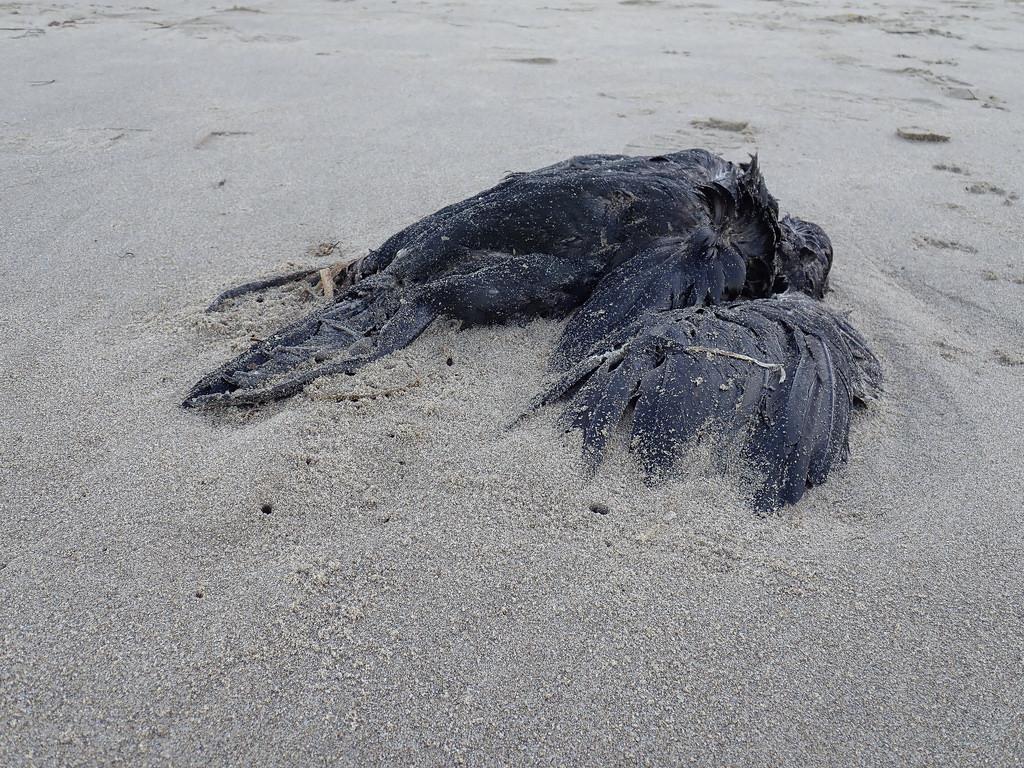 A carcass on sand