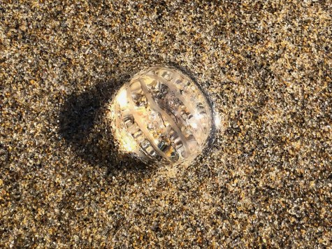 On wet sand, reflecting a bit of sunlight