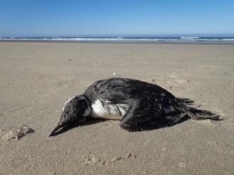 Carcass on sand