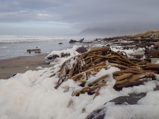 Sea foam and drift bull kelp bring nutrition to the shore