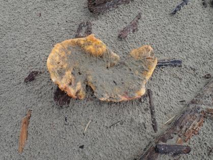 pumpkin fragment