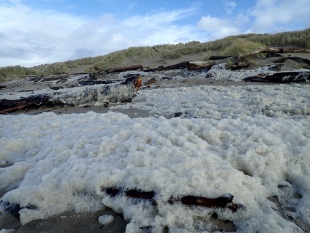 Sea foam on the backshore