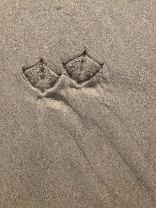 pair of gull tracks