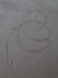 Circular tracks of Olivella biplicata in the sand