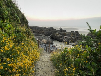 Yellow wildflowers line a trail to the seashore