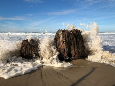 Surf pounds a drifted stump