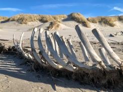 Expect marine mammal carcasses to wash ashore