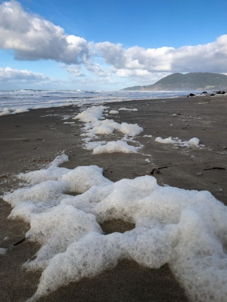 Winter surf whips up sea foam, a product of phytoplankton breakdown | A source of nutrition on beach
