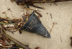 Hagfish trap funnel