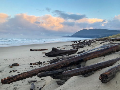 Eroded shelf separates the beach and the backshore, lots of big drift logs too
