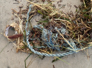 Drift line mass of lost line, eelgrass, surfgrass, a Dungeness crab shell, straw, and wood chips