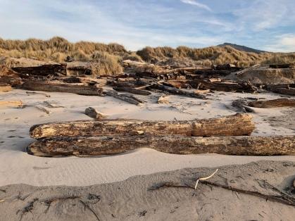 driftwood against the foredune