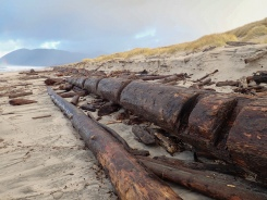 long straight log up against the backshore, with slots craved into it