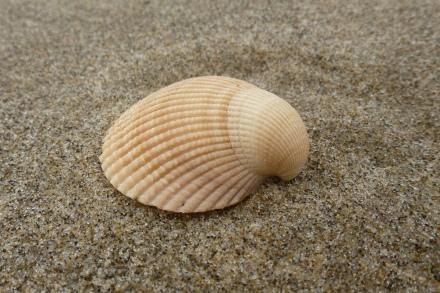side view of a single orangish valve on sand