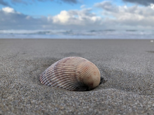 Shell on sand, surf zone in the background