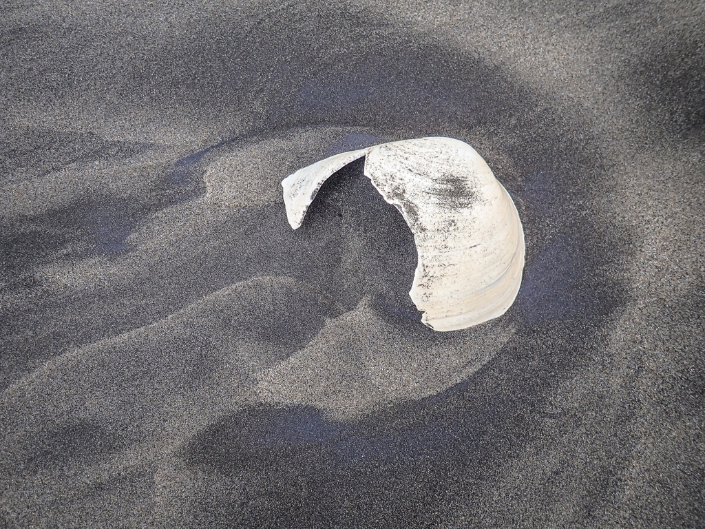 Fragment of a gaper clam; nice pattern in the sand