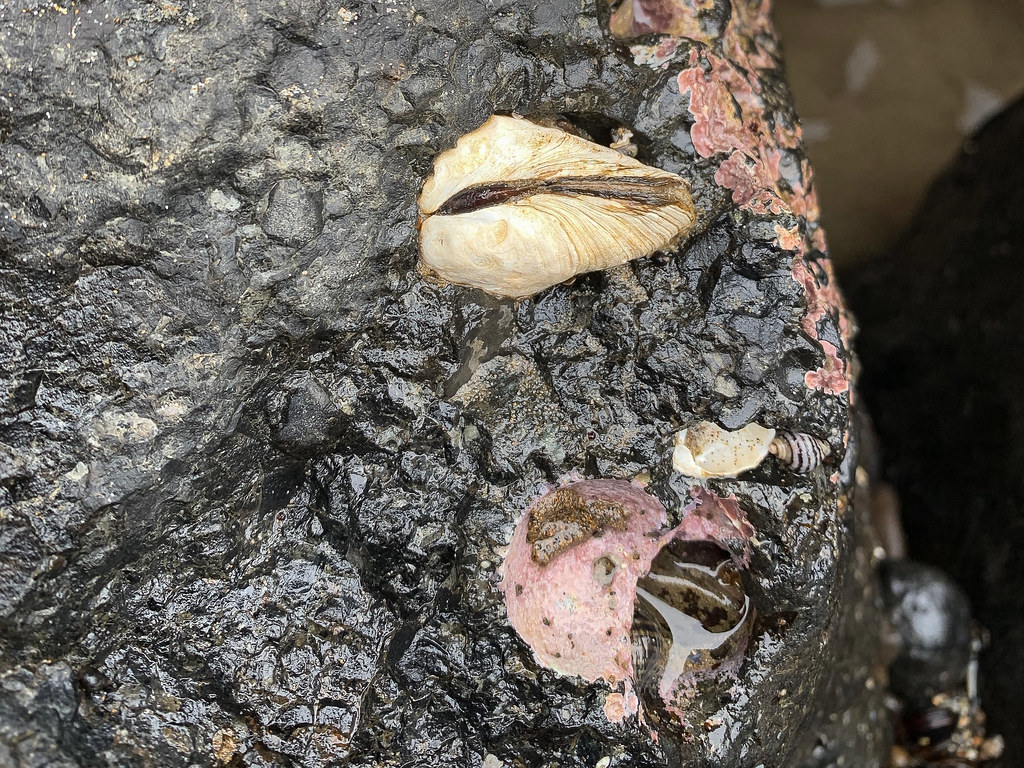 about half of a large live burrower exposed in har black rock