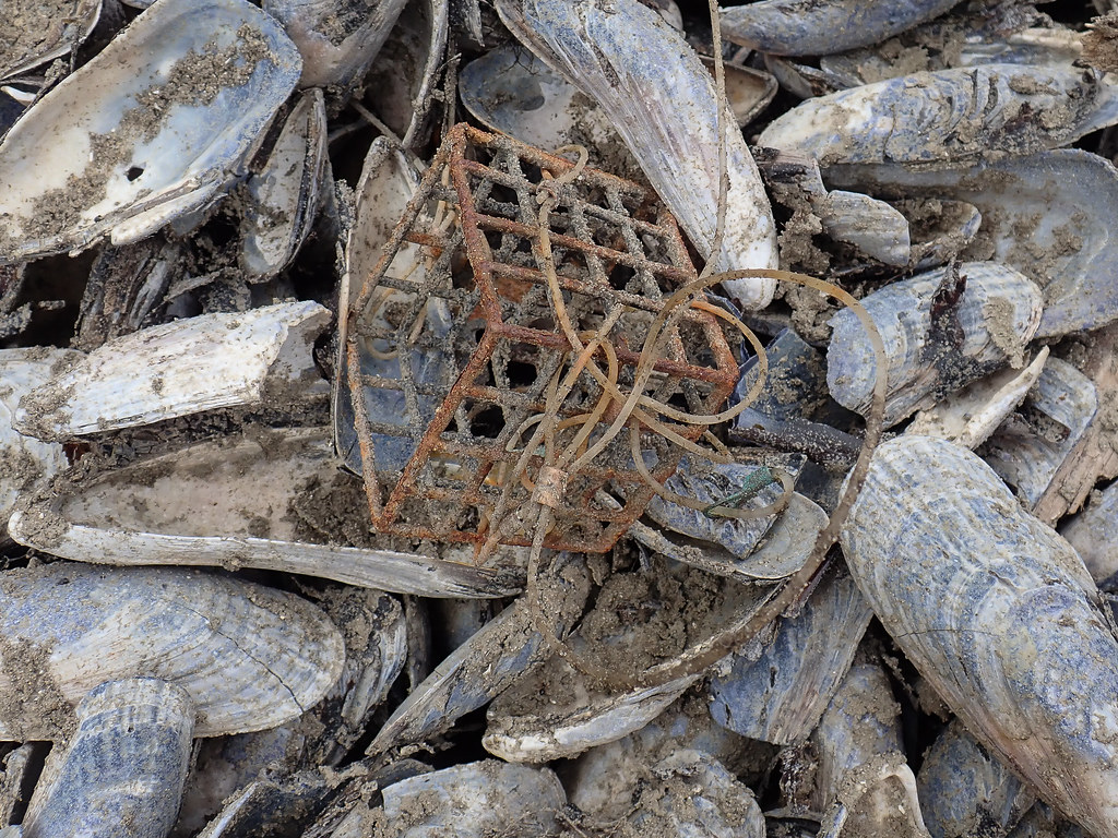 Bait box from a lost Dungeness crab trap