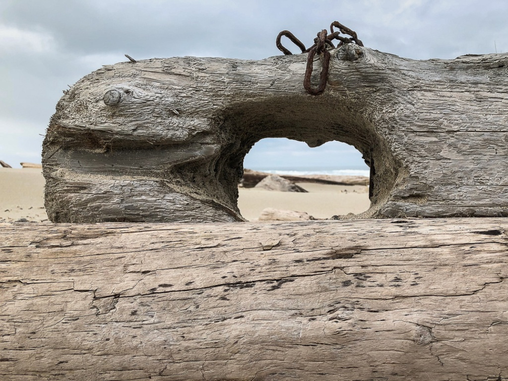 looking out to the surf zone through a man made hole in a drifted timber