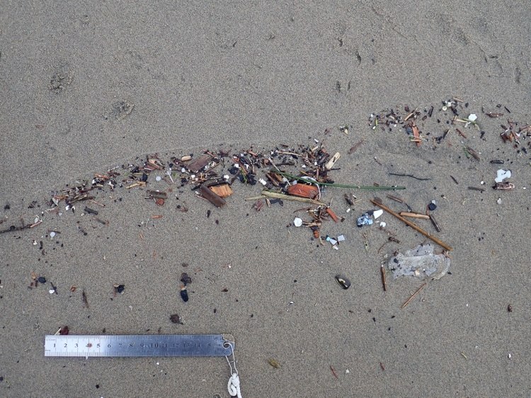 bunch of small debris, a 15 cm rue for scale