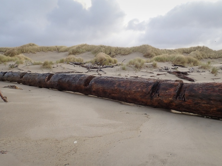 very long straight drift log, reminds me of a train