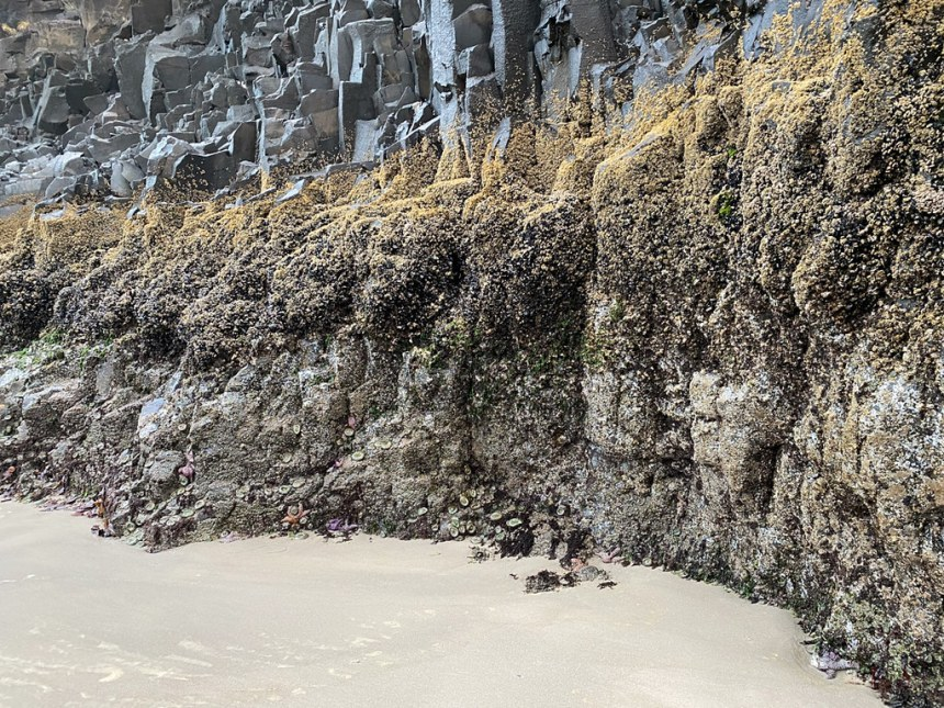 Zonation on a vertical rock wall. A band of barnacles up top. The mussel bed below.