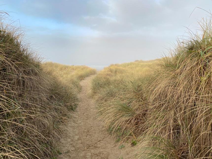 Trail through an Ammophila monoculture to the beach