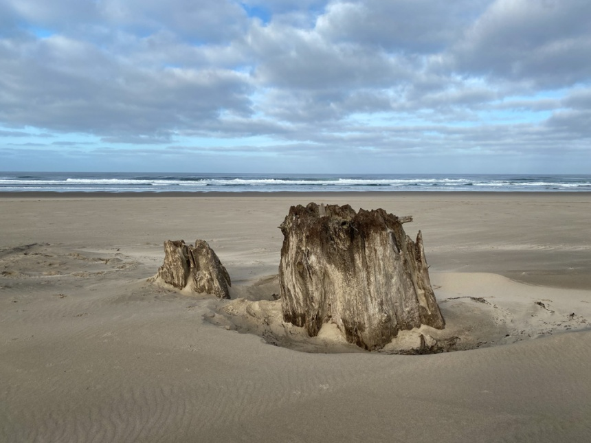 Old growth stump high on the beach. View out to the surf zone