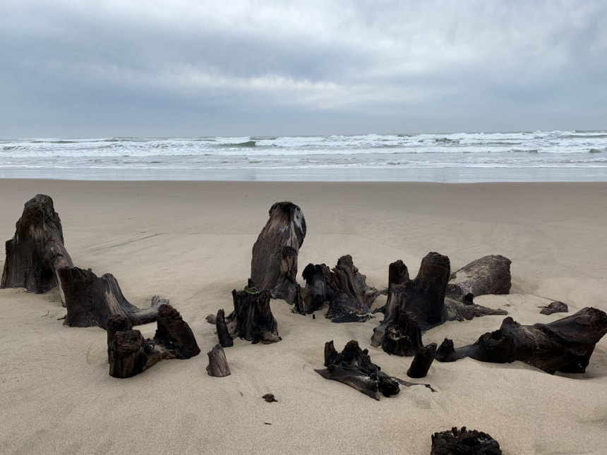 Just the root nubs poking out of the sand; surf zone in the background