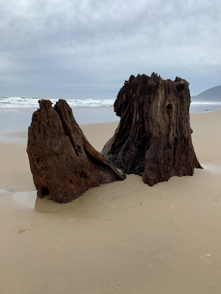 Old growth stump, right side up, surf in the background, moody skies