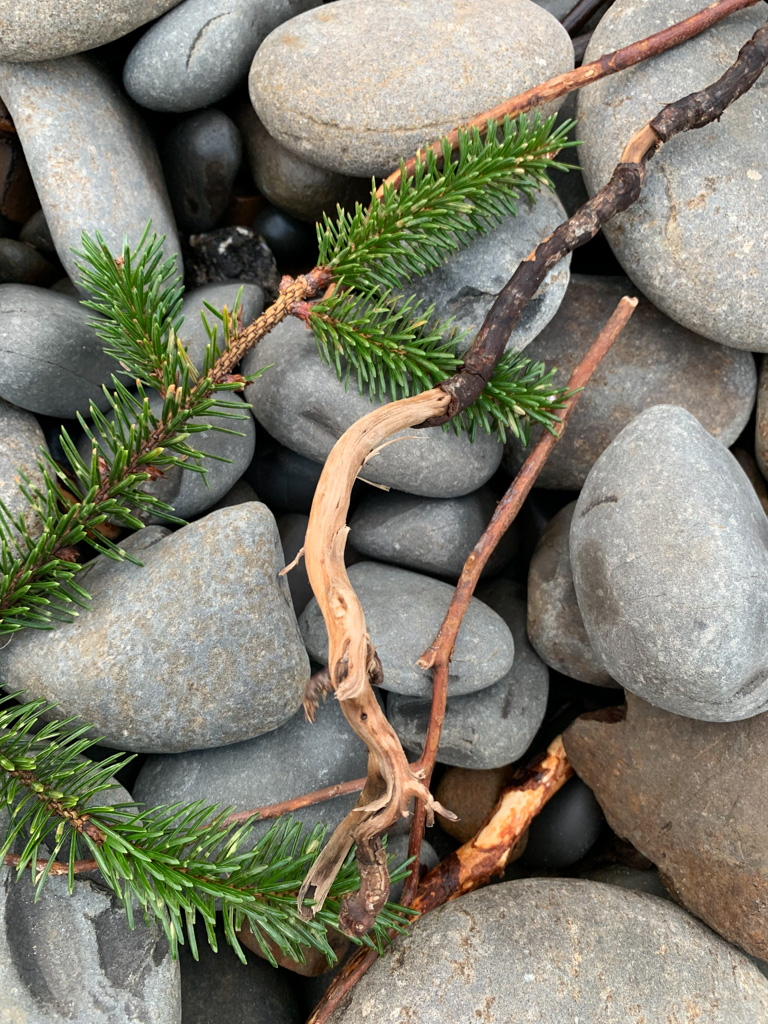 Close up of fresh branch tip on dry cobbles