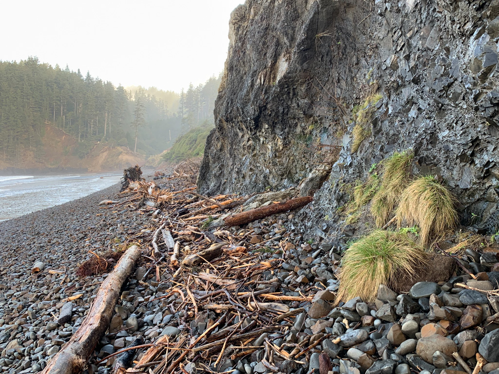 line of drifted wood on high cobbles along the base of a cliff; surf zone and spruce forest off to the left