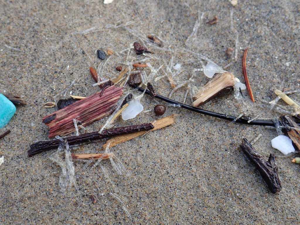 Thin, clear tubes appear in the drift with terrestrial and human debris, on sand