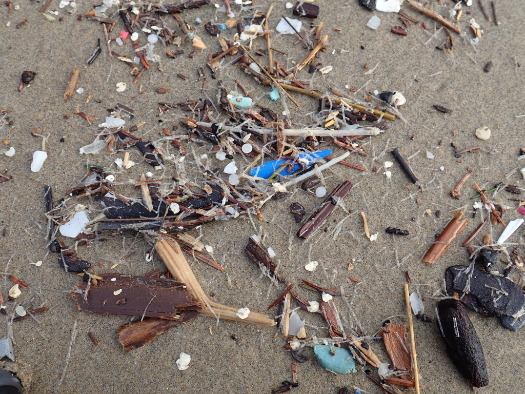 Lots of small stuff washed up, plastic fragments, hurdles, feathers, tubeworm casings, forest fragments
