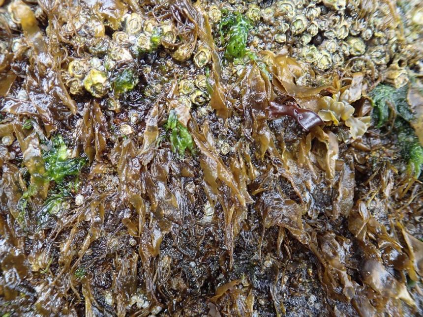 Blades among the barnacles