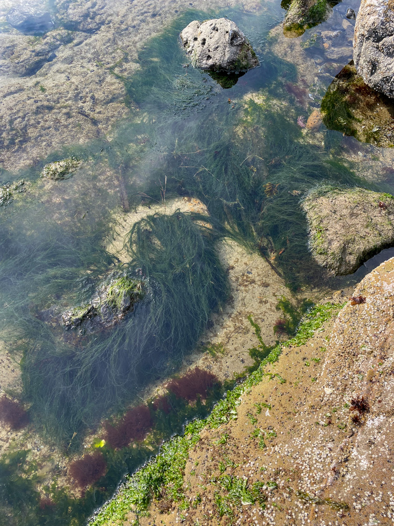 Looking down from above on a shallow pool with a lush growth of Urospora