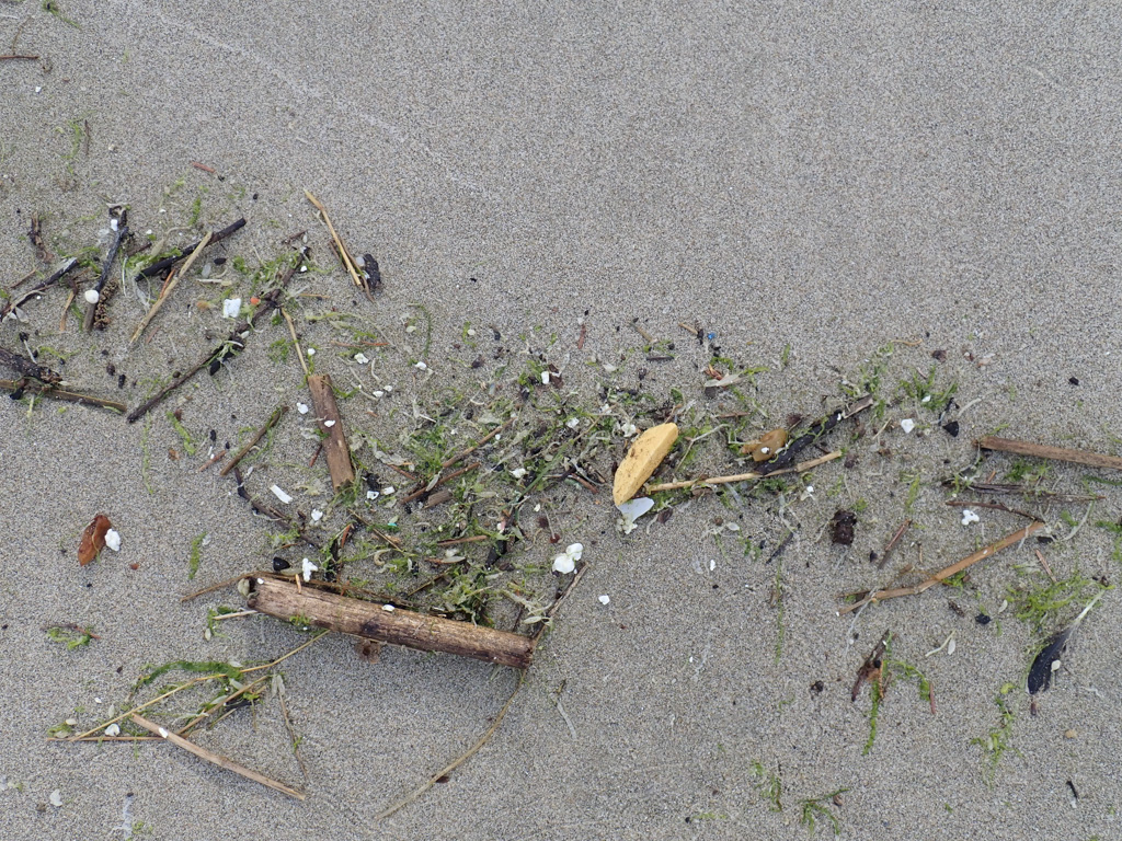 Green seaweed, tubeworm casings, terrestrial vegetation, and nurdles and plastic bits