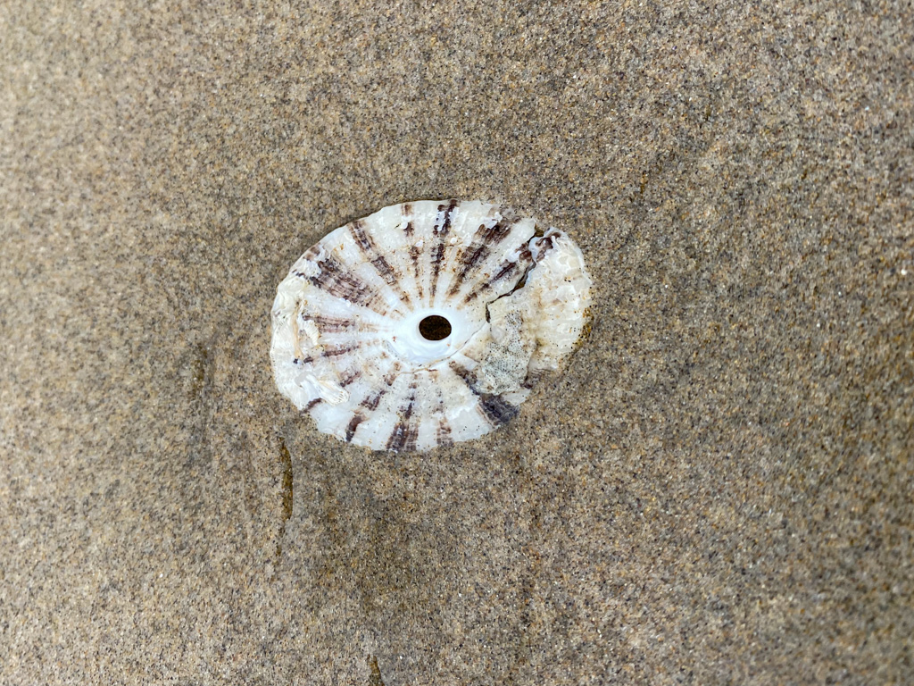 A drifted shell suffering some cracks, on beach sand